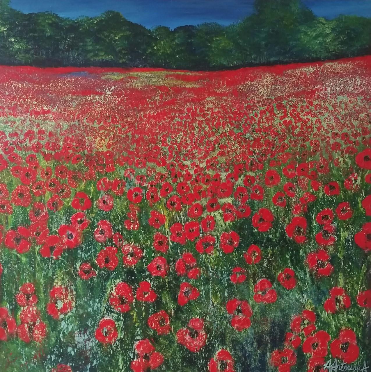 Poppy Meadow in June